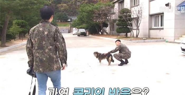 狗狗自愿入伍当兵,徒步走到10公里之外的部队,真让人泪崩!