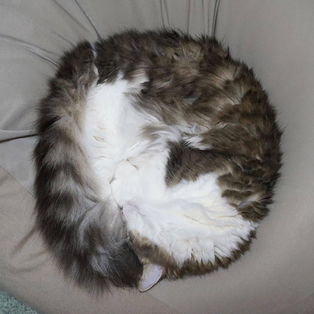 """猫咪为何招人喜爱?""""奇葩睡姿""""功不可没!"""