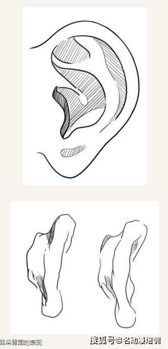 五官的结构和绘制,你了解多少?