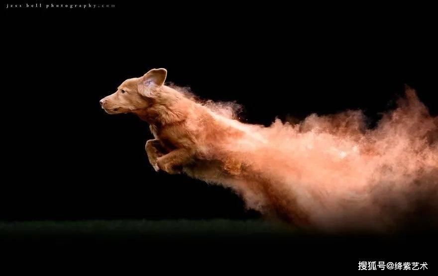 """不借助PS,摄影师拍出""""燃烧的狗"""",网友:有点不人道"""