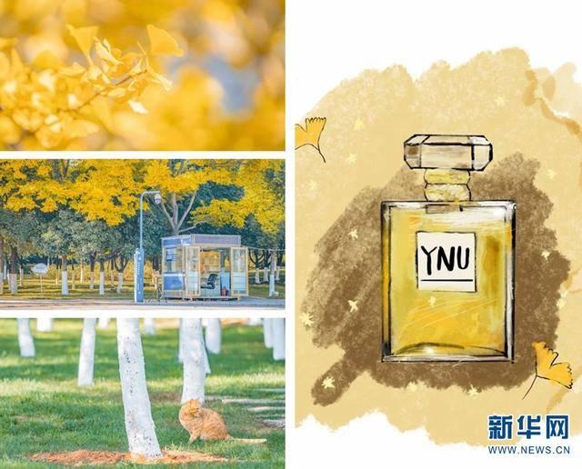 """以校园美景为""""香料"""",云大学子调出限量版""""香水""""!"""