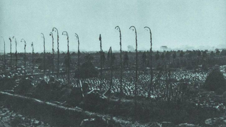 80年前日寇暴行下的浙江,32人出海仅4人生还