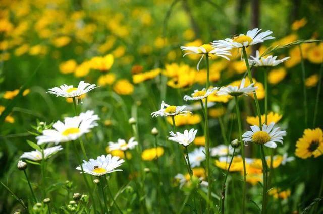花已成海,趁花期正盛赶快打卡潍坊北辰绿洲湿地公园