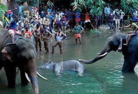 真实事件:一只大象对人类的复仇