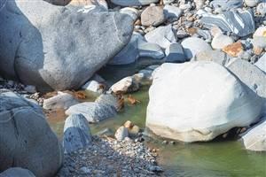 铜壁关26只熊猴集体洗澡解暑