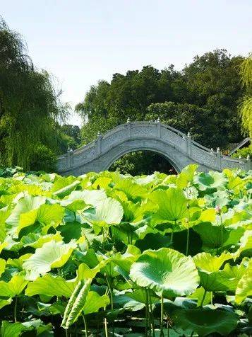 """上海⇋扬州等到直达啦!七月起,可以更轻松到达这座古风+美食之城!""""夏""""扬州秘籍先奉上!"""