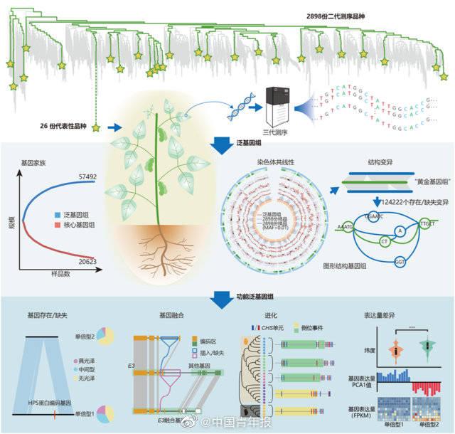 新突破!我国科学家成功绘出大豆图形泛基因组