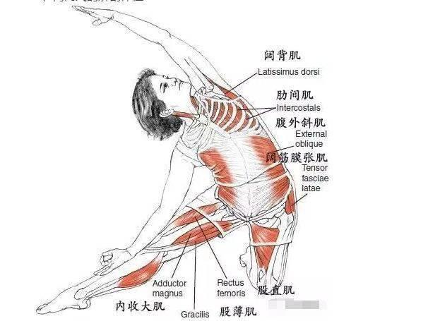 瑜伽体式,伸展肋间肌的门闩式 减肥窍门 第2张