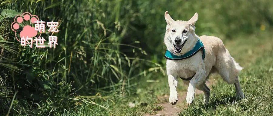 我家■狗子拆过最贵的东西是什么?,