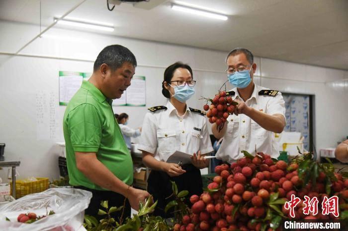 800公斤的广州增城荔枝首次走进东盟市场国才教育