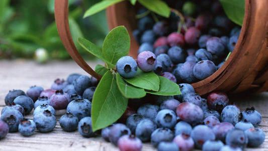3种食物或可提高身体免疫力 蓝莓富含花青素