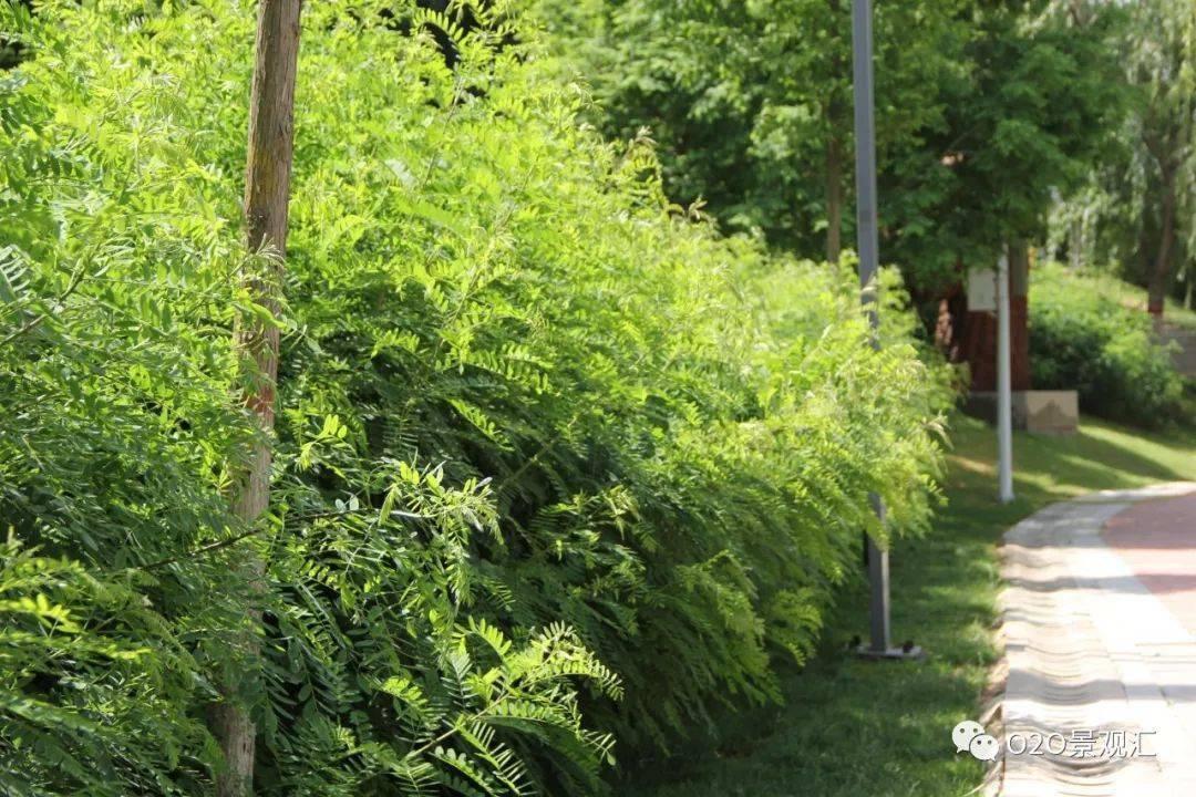乡土植物在园林绿化中的应用研究