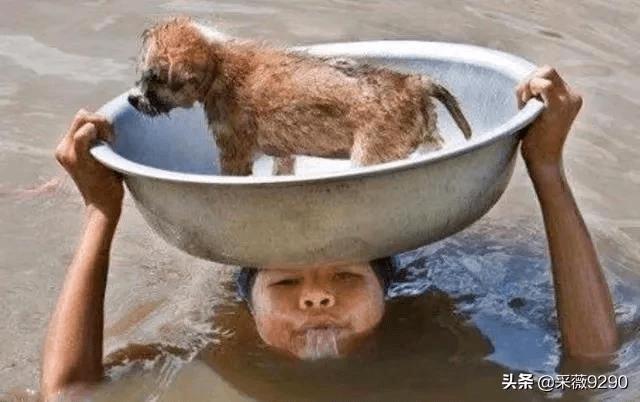 南方汛情严重,消防官兵将狗狗们解救,狗狗竟做出这样的脸色,令人暖心