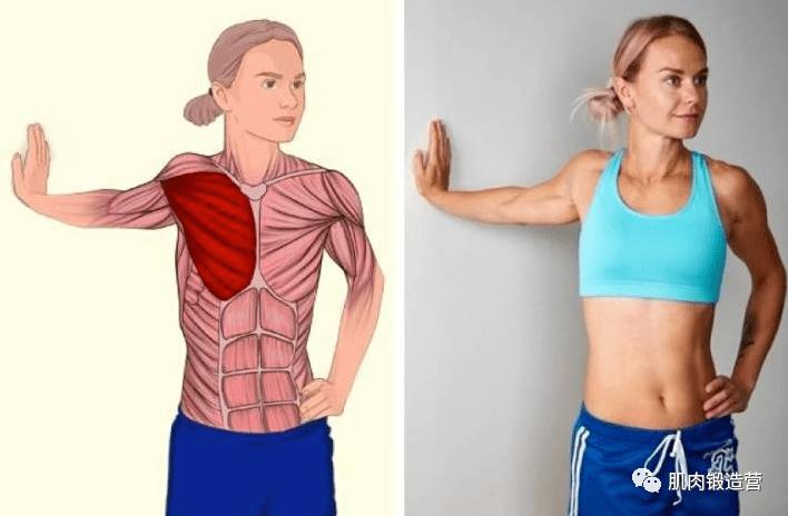 女生胸部大小是天生的?认真锻炼,你也能练出迷人胸型_女性