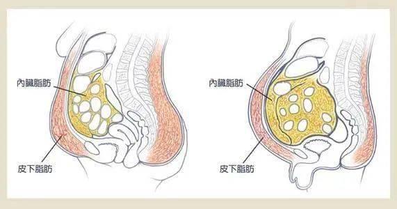 怎样减内脏脂肪?这个最有效方法,一定要知道!