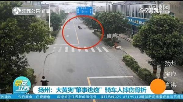 """大黄狗撞上电动车""""肇事逃逸"""",民警反复看监控找到狗主人"""