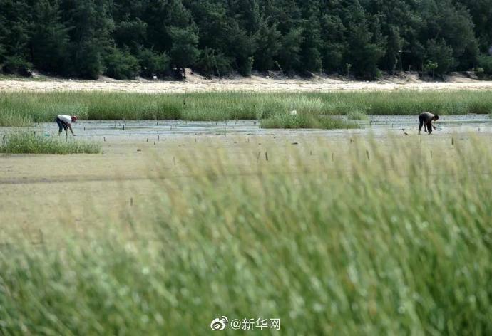 660多種外來物種入侵中國 什么是外來物種?