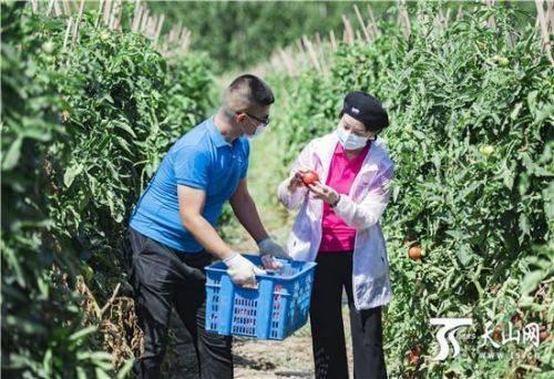 """新疆采取多种措施购买农产品销售的""""最"""
