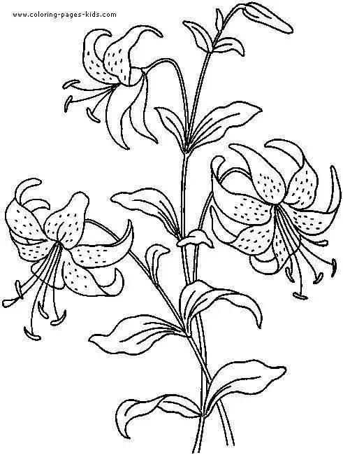 基础花卉线稿,临摹学习的好资料