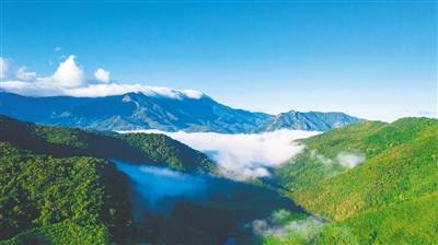 自海南热带雨林国家公园体制试点以来