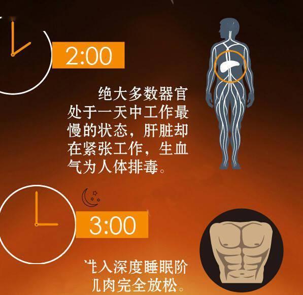 人体24小时使用手册,合理安排作息,