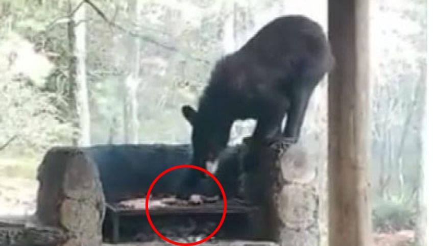 墨西哥一只黑熊闯入居民家里烤肉架上抢走烤肉