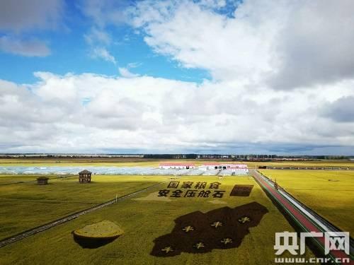 黑龙江:紧抓农时高标准春耕精细化田管粮食生产丰收在望