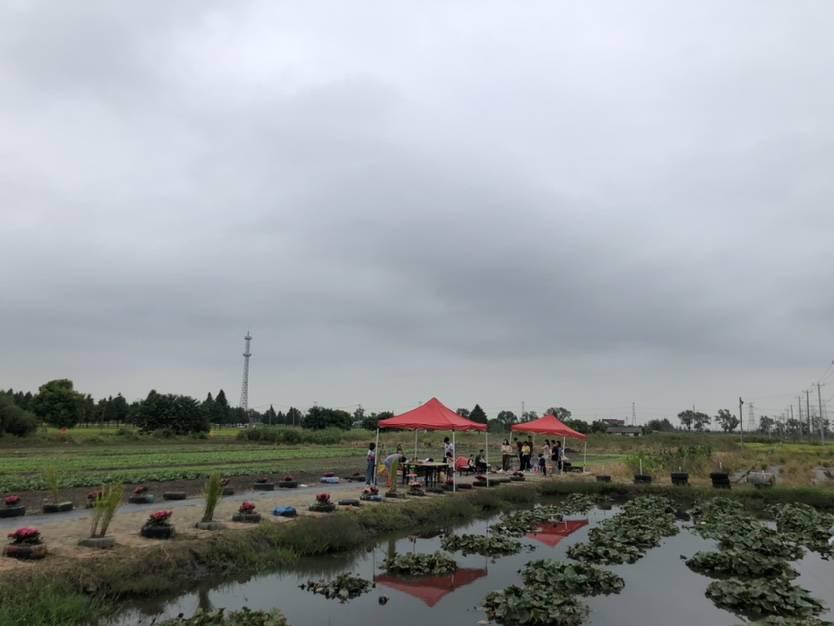 与国同庆 务农也是创业,丰收季上海这个农场主又忙又喜