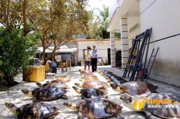 海南破获特大非法收购、运输、出售珍贵、濒危野生动物及其制品案