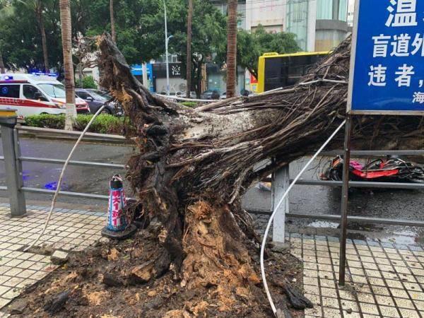 皇冠体育app:海口大同路突然倒了一棵大树 女子被压死!人们举树救人...