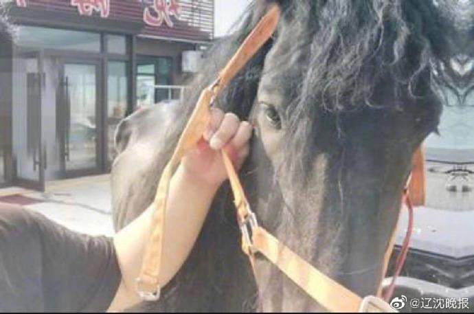 """辽宁身价30万的网红马被主人带出去玩""""私奔""""去了花生田"""