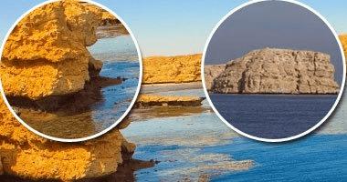 恐怖!埃及红海潜水胜地再现咬人鲨鱼,2名游客和1名导游受伤