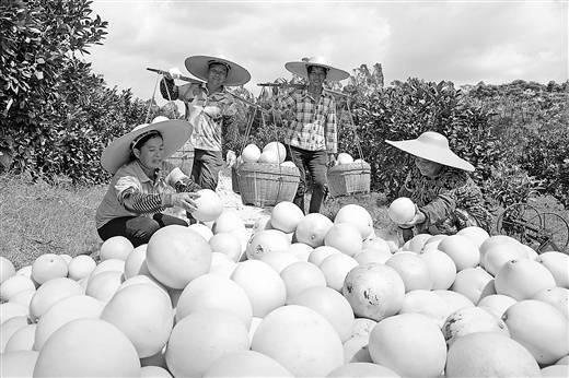 """为农民打造脱贫致富""""经济绿洲"""""""
