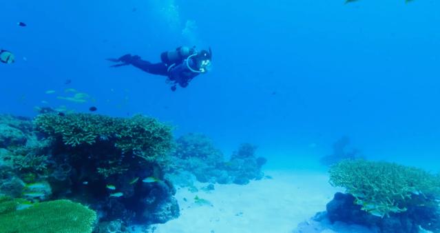 《碧蓝之海》真人电影开场片段公布 潜水社大家庭的爆笑校园故事