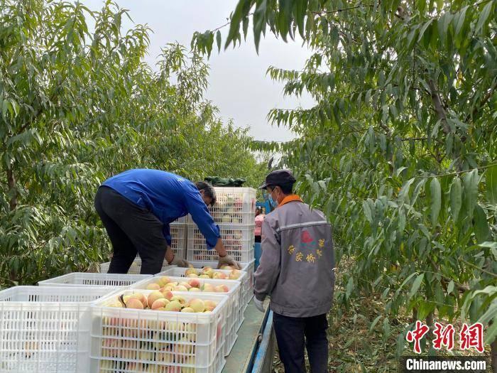 """探访河北阜城""""种养结合""""生态循环特色产业"""