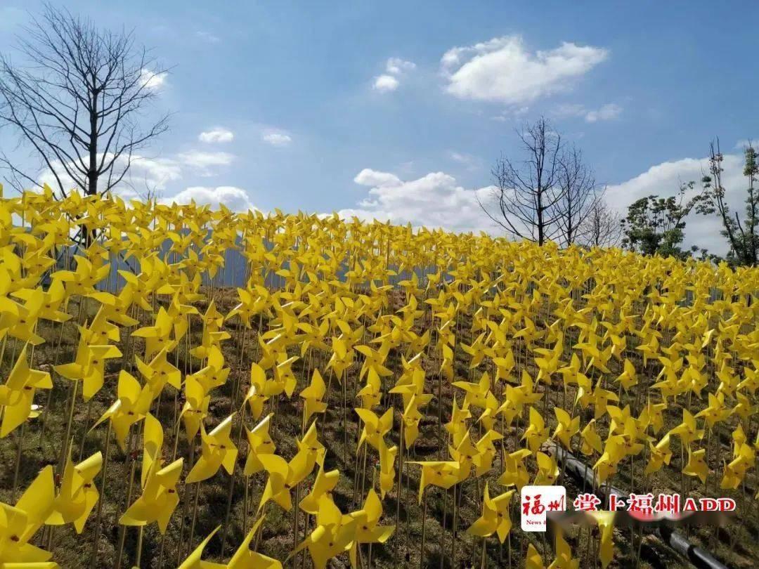 """今日开园!福州再添""""童话王国""""!万只小风车等你来……"""
