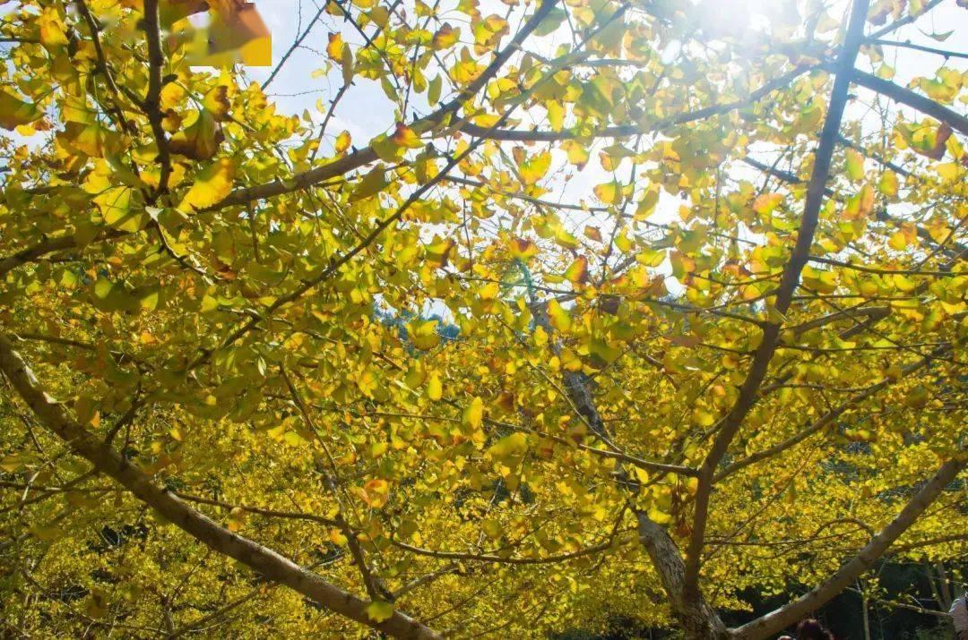 美哭!广东秋天赏红叶景区大盘点!现在出发正合适!
