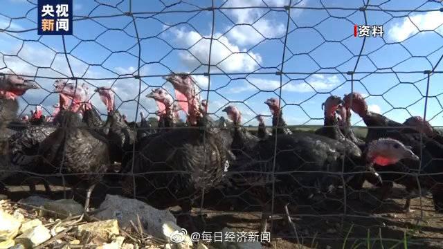 英北部现禽流感 一万多只火鸡将被扑杀