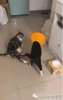 回家看到宾士猫的新造型愣住……结果调监视器笑喷!