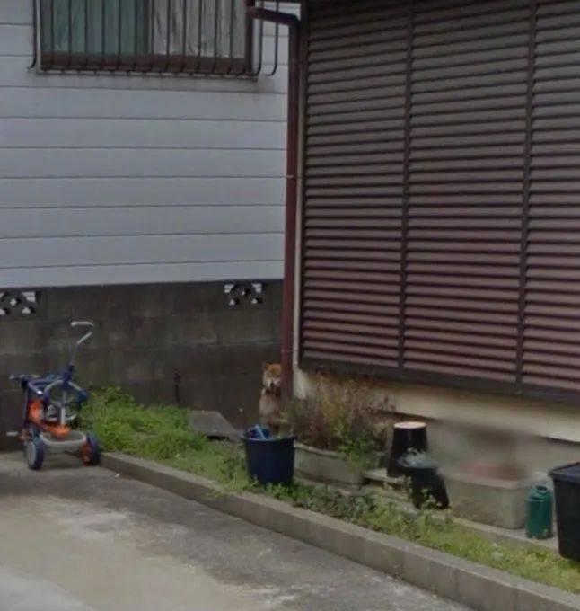这位日本网友和谷歌街景的故事,感动了58万人。  第8张