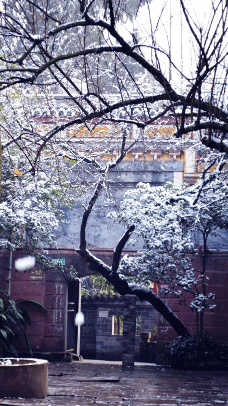 花漾新津,雪霁初晴,邀您共赏