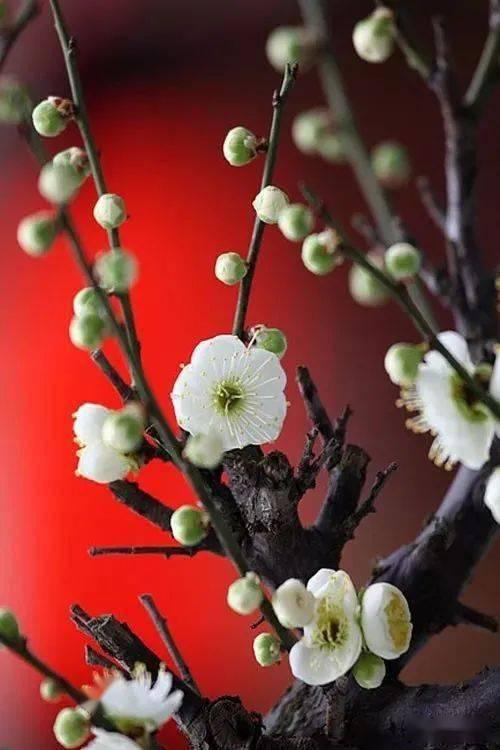 12首诗12幅书法,12首曲12种花