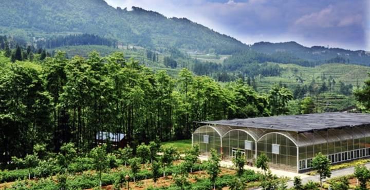 """淘宝助农搭载航天科技,贵州两千种植户收入""""飞涨""""五千"""