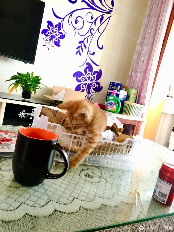 猫就是仗着自己可爱,为所欲为的小王八蛋!