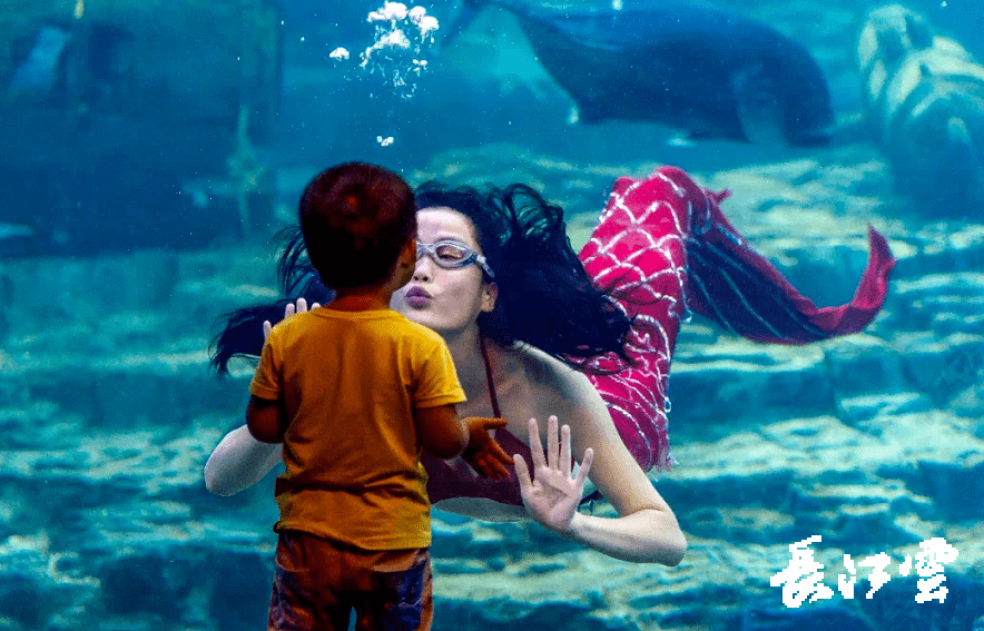 武汉东湖海洋世界游玩攻略 怎么办才能去看企鹅