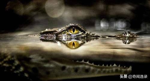 鳄鱼的眼泪什么启示(鳄鱼的眼泪下一句是什么)插图(1)