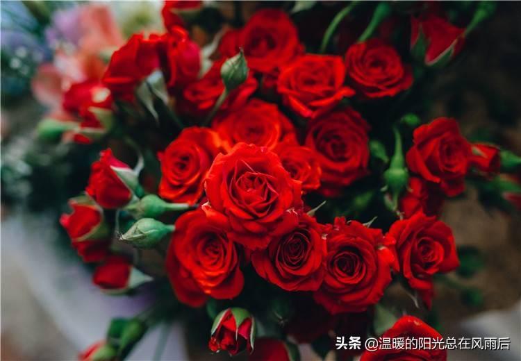 黑色玫瑰是什么意思(黑玫瑰代表什么)插图