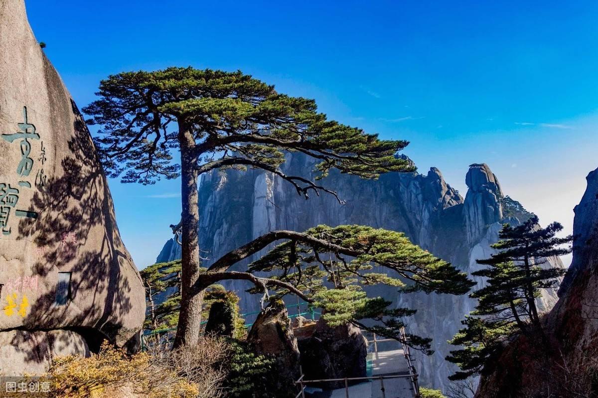 中国最值钱的一棵树,每天遭万人围观,还有专人24小时轮流守护