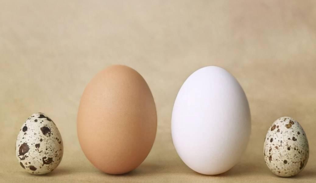 """鹌鹑蛋被称为""""营养品"""",难道比吃鸡蛋还好?2种人一口都别多吃"""