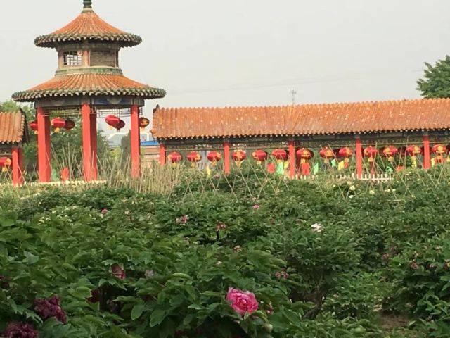 牡丹城菏泽与浪漫城珠海,两座城市前景你看好谁?